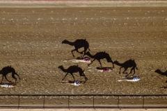 """""""Vertical Racing"""" Ehrenplatz in der Kategorie """"Sport"""" © Shoayb Khattab"""